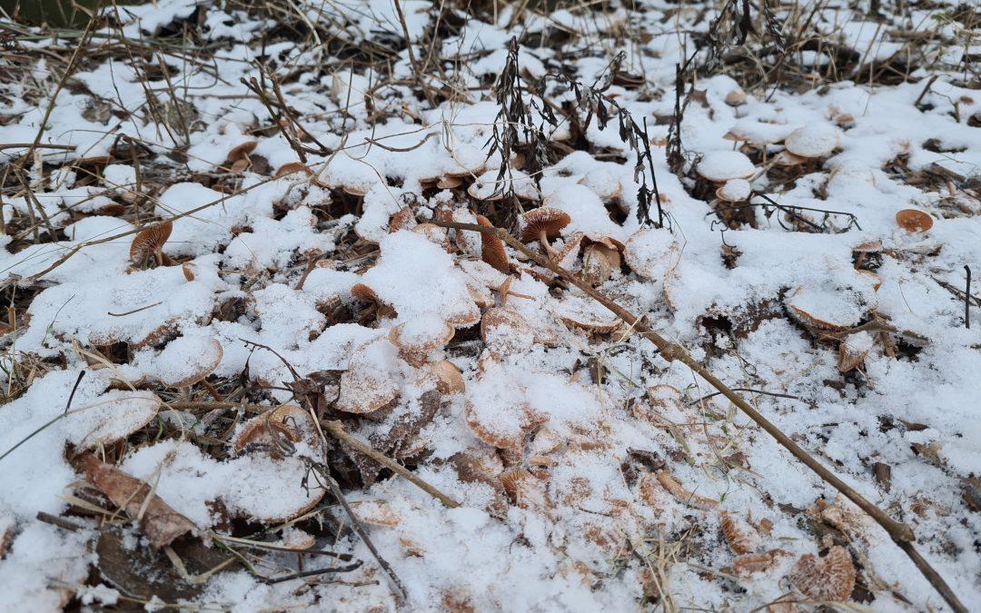 Ny fotokonkurranse – vinterstemning. Husk innen 1. mars!